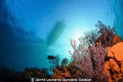 This is a view from the coral reef in Cabo Pulmo National... by Jaime Leonardo Gonzalez Salazar